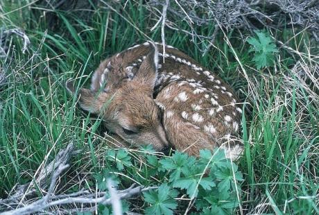 Oasi-WWF-pressi-di-Pula-Sardegna.jpg