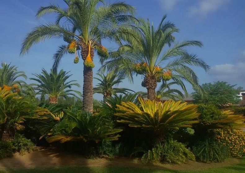 collezione-piante-rare-Sardegna.jpg