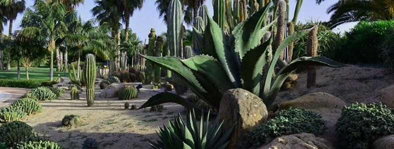 Il nostro giardino esotico in Sardegna: un paradiso da visitare e vivere