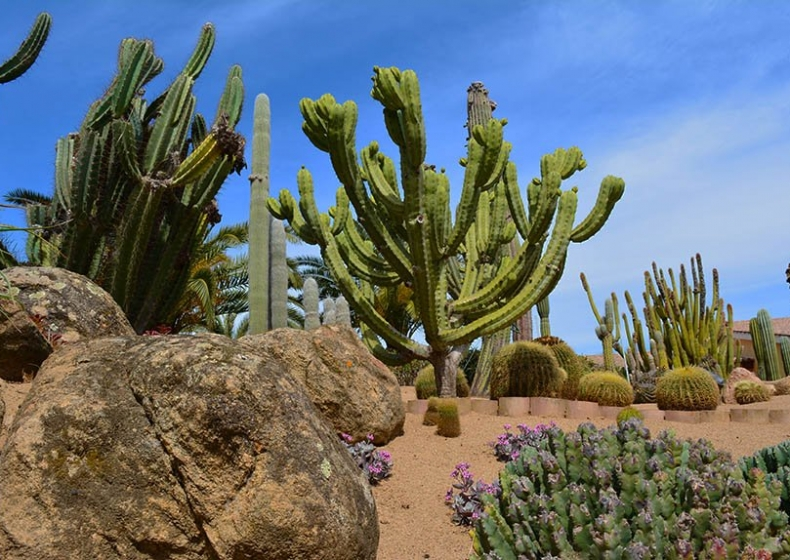 piante-succulente-Lantana-Resort.jpg