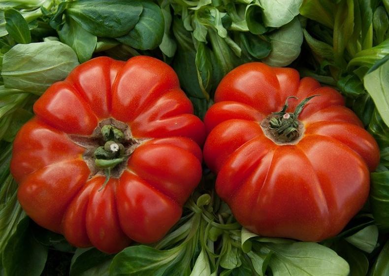 pomodori Cagliari