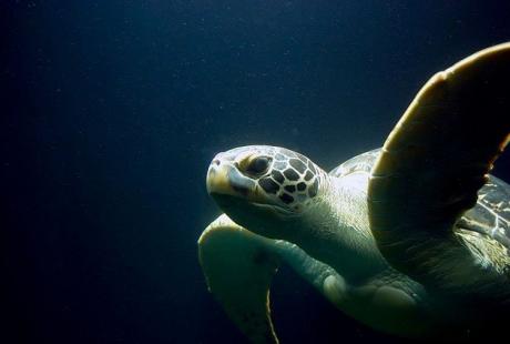 rifugio-tartarughe-marine-Sardegna.jpg